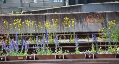 blommorcentralen