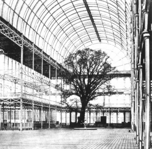Crystal_Palace_Great_Exhibition_tree_1851