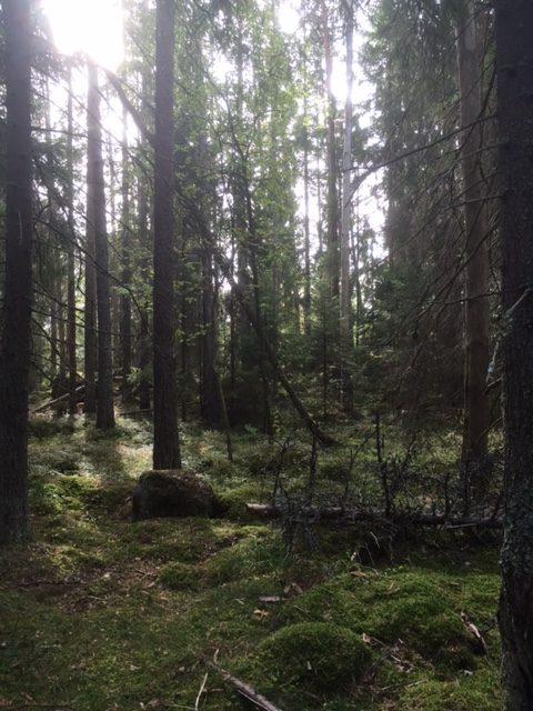 trill_skog